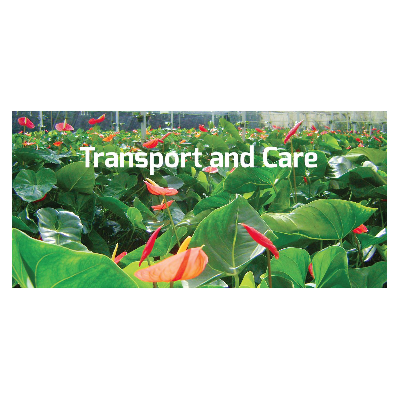Storage and Transport Care